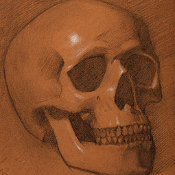 <strong>Skull Sketch</strong><br>Skull Sketch Study<br />