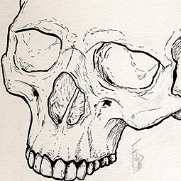 <strong>Skull study (Ink)</strong><br>Skull study (approx. 2hours) ink on watercolor paper <br />